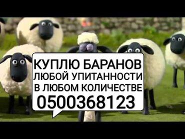 купить постельное белье для гостиниц в розницу в Кыргызстан: Куплю баранов на мясо и на откорм