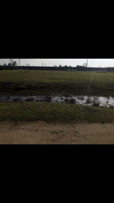 Astara şəhərində Astara yayon Ercivan qesebesinde Arcin petrolun qarwi terefinde 60
