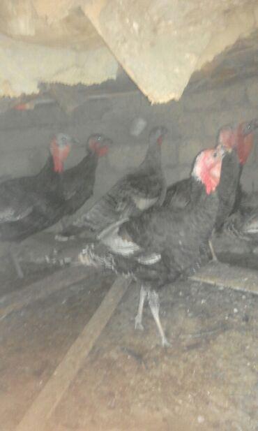 Животные - Наваги: Птицы