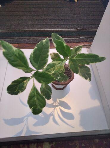Есть и другие комнатные растения