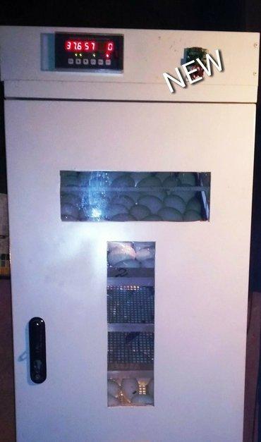 Sumqayıt şəhərində Son nəsil idarəetmə kontrolleri ilə təmin edilmiş 1100 toyuq yumurtası