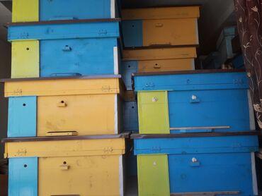 Пчелиный улиг