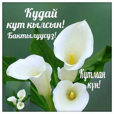 учительница начальных классов в Кыргызстан: Я по профессии учительница начальных классов. Работала в