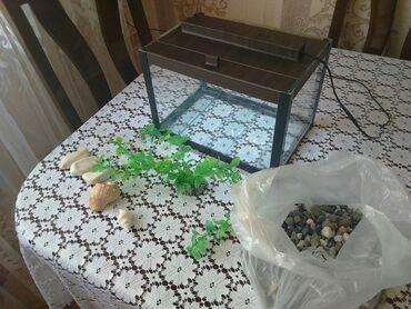 zapchasti na deu в Азербайджан: Akvarium satilir tezedir Uzunlugu 30 smHundurliyi 20 smEni 20 sm. 12