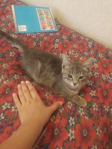 Животные - Орто-Сай: Ищем хороших хозяев для котёнкаДля подробной информации пишите в