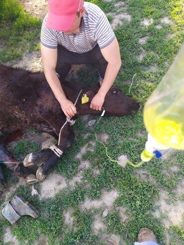 ветеринар на дом бишкек в Кыргызстан: Все услуги ветеринара