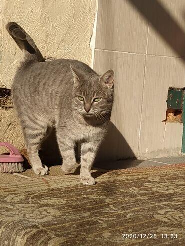 Животные - Шабран: Коты
