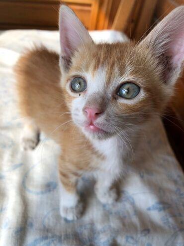 Фонд помощи Животным Добрые руки, ищет добрые руки для котёночка, Маль