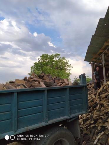Дрова на зиму карагач сухие в Бишкек
