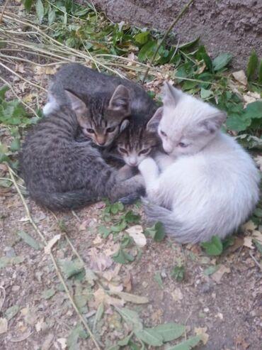 Деревенские котятки ищут дом. Полосатых трое один котик, две девочки