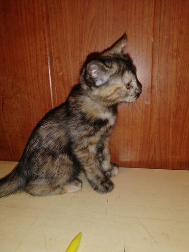 2694 объявлений: Котята в хорошие добрые ручки к лотку приучены очень игривые