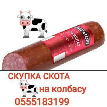 Скупаю забой коров и лошадей  колбасный вариант без посредников
