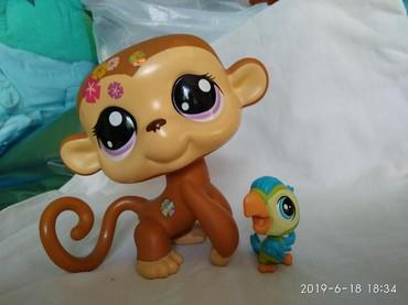quest shop muzhskaja odezhda nord в Кыргызстан: Pet shop обезьяна большая оригинал 300 сом. Попугай оригинал маленький