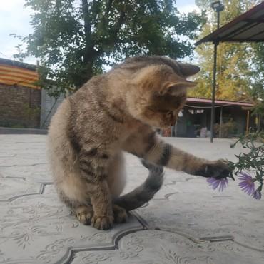 Коты - Беловодское: Милый и прекрасный котенок, без вредных привычек, ищет хорошего