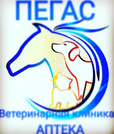 В центре города Кант открылась ветеринарная клиника ПЕГАСГрафик работы