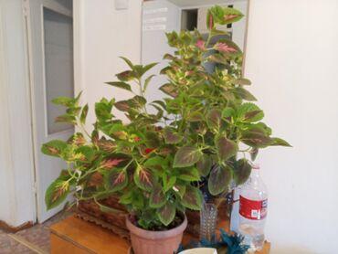 Срочно продаю комнатные растения очень дёшево от 50 до 250