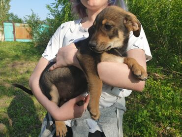 собаки сколько стоит в Кыргызстан: Отдадим в добрые руки. У родителей щенков очень хороший характер