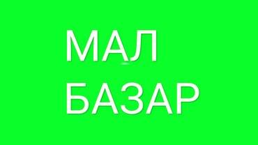 Ютубтан ТЕЗ К  каналына жазылып в Бишкек