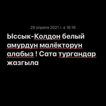 Другие животные - Кыргызстан: Ыссык -Колдон белый амурдун малёкторун алабыз ! Срочно 50кг ойдо керек