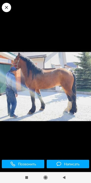 21 объявлений   ЖИВОТНЫЕ: Куплю   Лошади, кони   Любое состояние