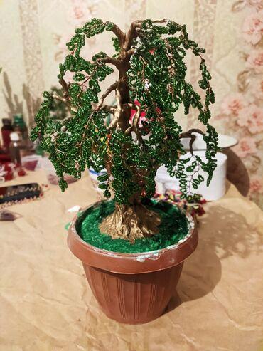 Бисир Дерево