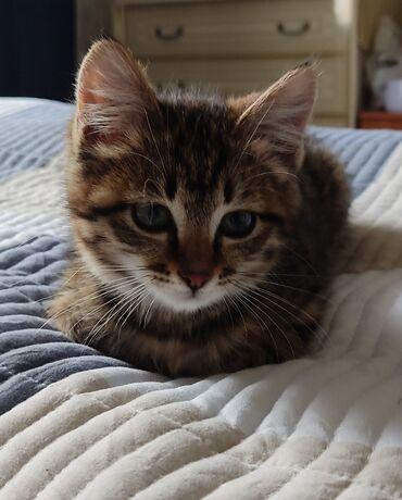 Животные - Байтик: Отдам котенка в добрые ручки,) девочка
