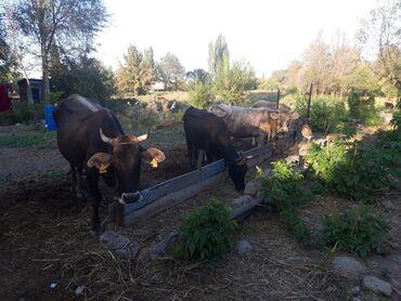 Другие животные - Беловодское: Договорная