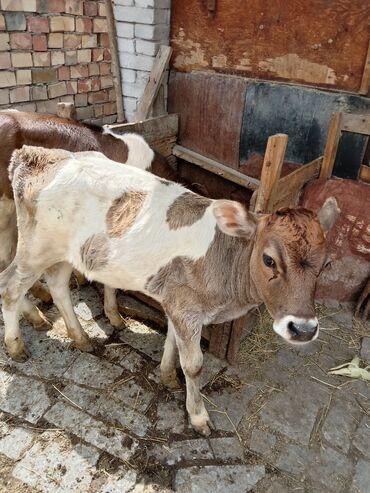 Животные - Ивановка: 30.000 за каждую торг уместен