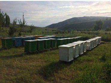 Продаётся мёд чистый Ат-башынский Мёд в Кара-Суу