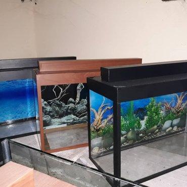 Bakı şəhərində Teze akvariumlar