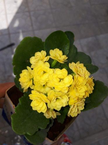 Продаю цветы#цветок#см.профиль разные много 😊 в Лебединовка
