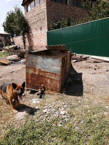Садовая мебель в Кыргызстан: Продаю 2хкубовый железный бассейн, сбоку есть слив