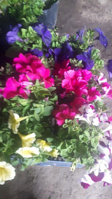 Продаем многолетние цветочки кустарникиАламединский рынок есть