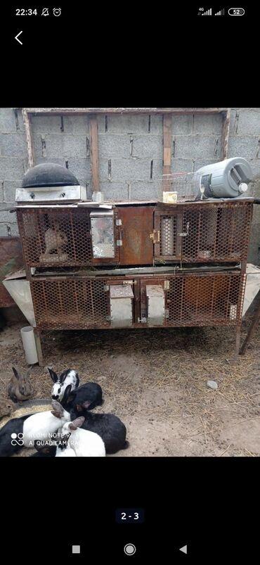 купить химчистку торнадо в бишкеке в Ак-Джол: Куплю клетку для кроликов желательно без маточников пишите в директ