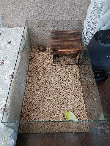 Аквариумы - Кыргызстан: Террариум с крышкой. С деревянным домиком. Район начало Аламедин 1