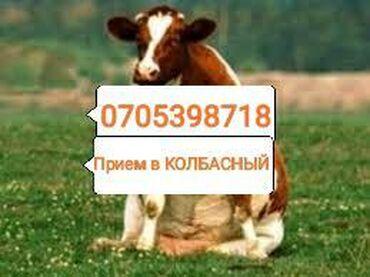 jelektriki na vyzov в Кыргызстан: Принимаем скот в колбасный цех приезжаем сами звоните в любое время