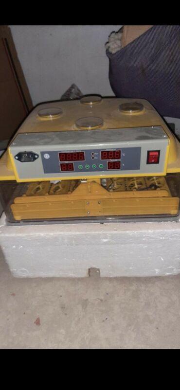 Животные - Баткен: Инкубатор 96 яиц, абалы жакшы