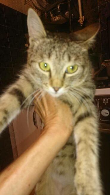 Отличный кот подросток ему 6месяцев в хорошие руки