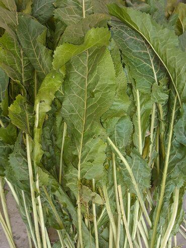Другие продукты питания - Кыргызстан: Продаю листья хрена