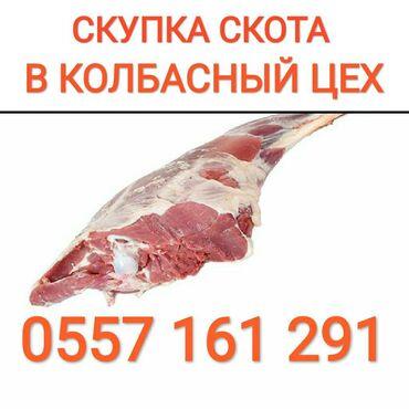 Скупаем скот в колбасный цех любой упитанности и возраста. по