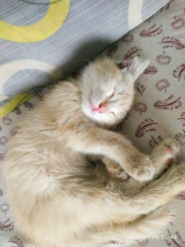 Находки, отдам даром - Аламедин (ГЭС-2): Котенок мальчик в добрые руки