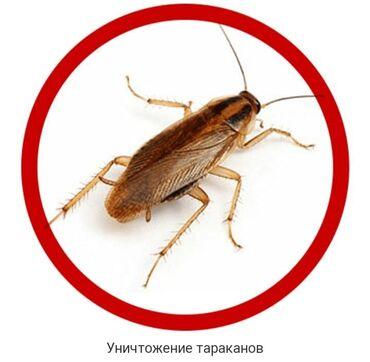 средство от клопов бишкек in Кыргызстан | КОСМЕТИКА: Дезинфекция, дезинсекция | Клопы | Квартиры