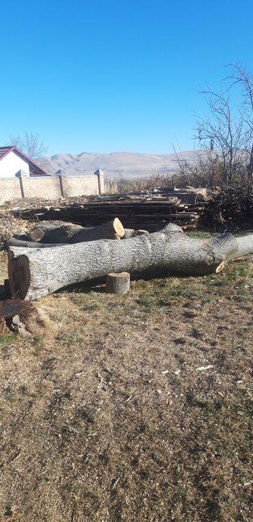 52 объявлений: Срочно продаю дерево ореха