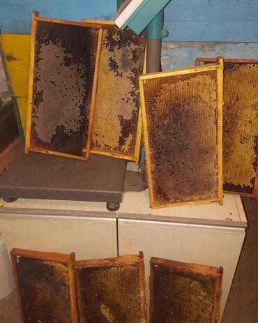 суточный 1 комнатная квартира в караколе in Кыргызстан | ПОСУТОЧНАЯ АРЕНДА КВАРТИР: Продам гнездовые медовые рамки для зимовки. Средний вес 1,7 кг. Цена