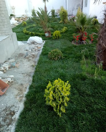 xalcalar ve qiymetleri в Азербайджан: Qazon satilir eni yarpaq kanada toxumu ile ekilem qazondur villa bag