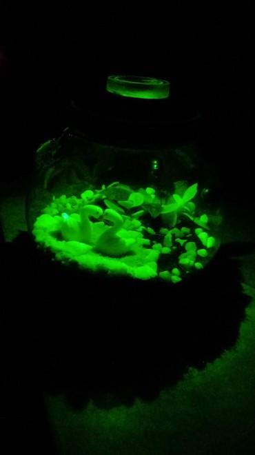 флорариумы на в Кыргызстан: Флорариум-светильник