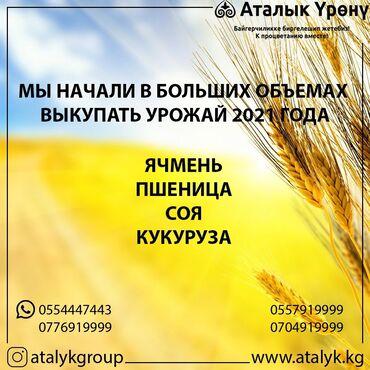 ячмень бишкек in Кыргызстан   ГРУЗОВЫЕ ПЕРЕВОЗКИ: Уважаемые фермеры, мы рады сообщить вам о том, что мы начали в больших