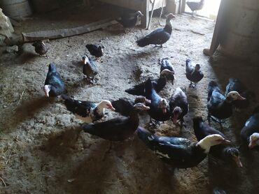 Животные - Хызы: Птицы
