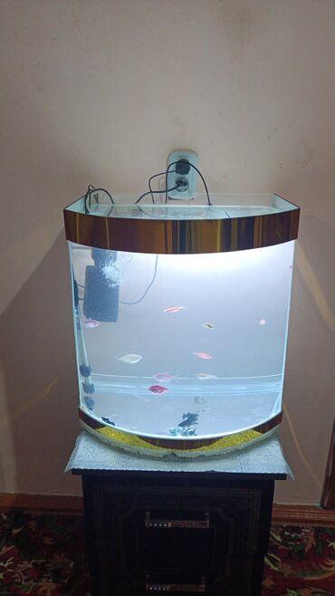 597 объявлений: Продаются аквариум 60 литер город ош