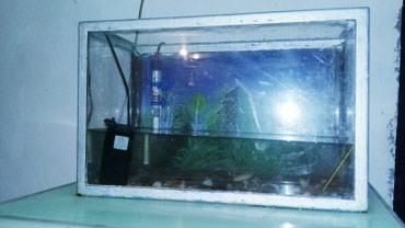 Gəncə şəhərində Akvarium...icinde su termometri,su filtri,su isigida verilir.bir